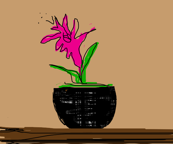 Pink flower with arms in a pot
