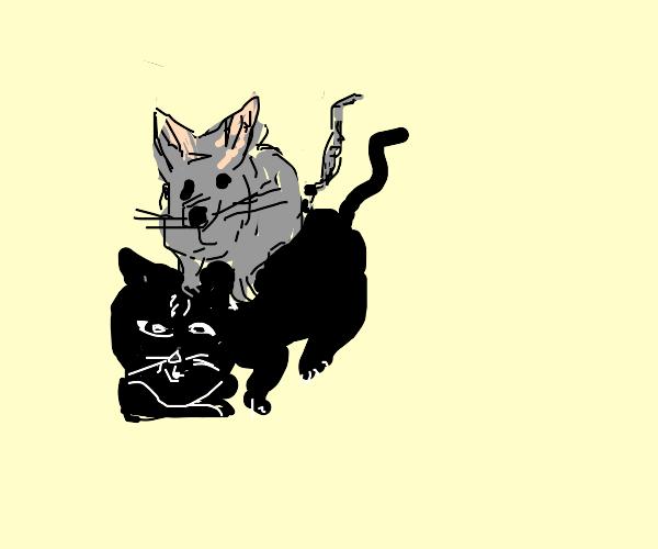A rat befriends a cat
