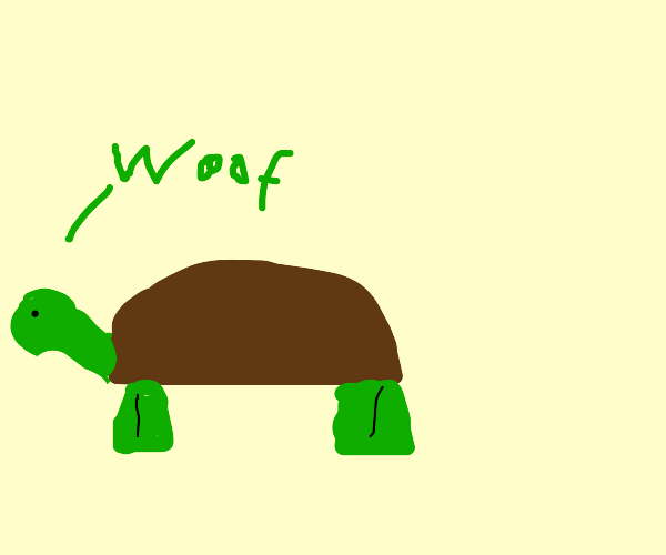 a turtle that acts like a dog