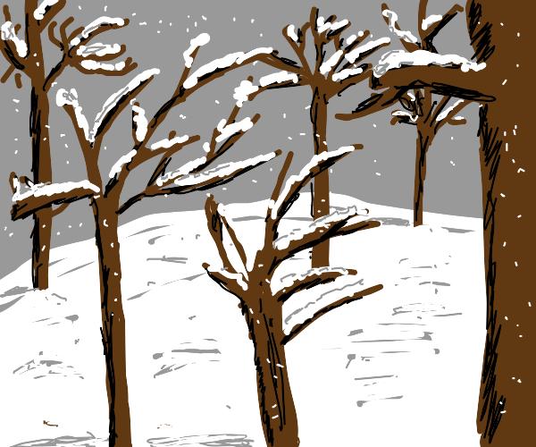 Snowy forest under grey sky