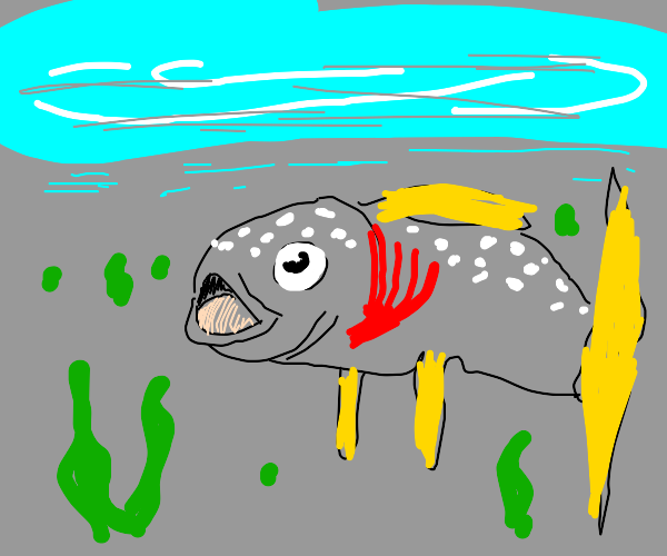 Grey fish in the water