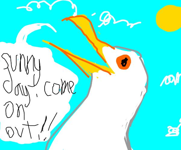 Bird announces the weather