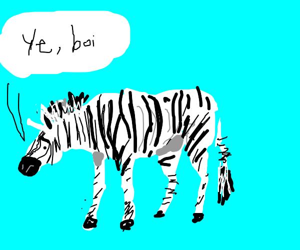 "Malnourished zebra says ""Ye, boi"""