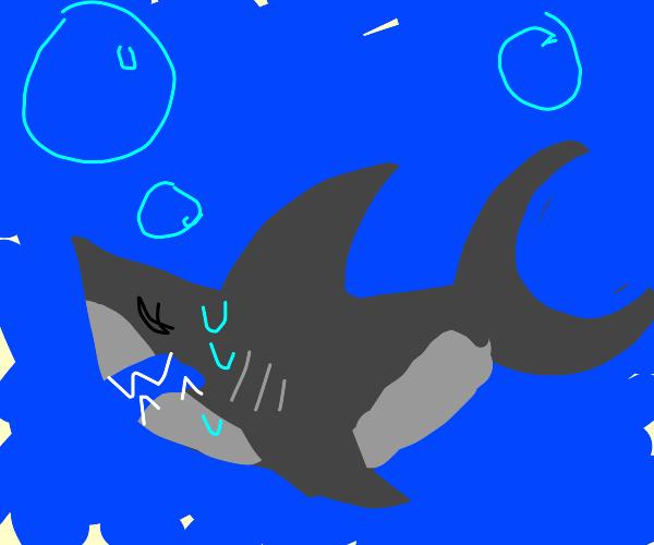 A terrified shark