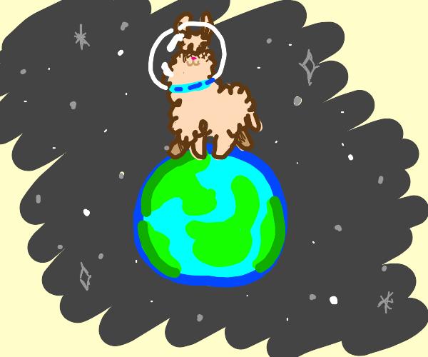 Llama on top of the world
