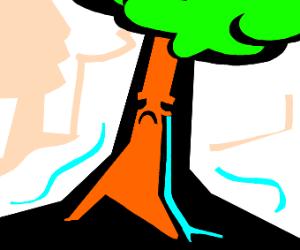 A very sad tree cries