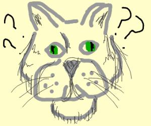 confused kitten