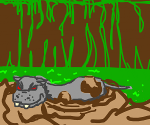 angry hippo in a swamp