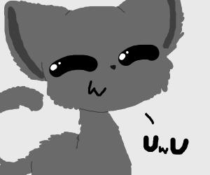 Gray Fluffy Cat UwU