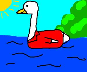 Swan wearing a Coat