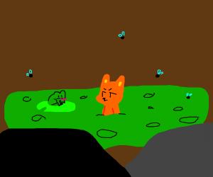 Cat in the swamp