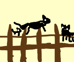 cats on a fence