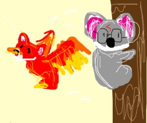 Harry Potter Koala sees a koala phoenix