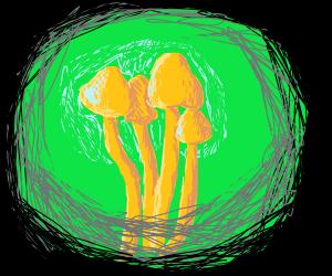 Glowing golden mushrooms