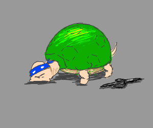 A Ninja Turtle but its an actual turtle
