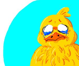 Duck cryin