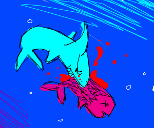shark eats big ol magenta fish