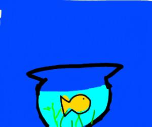 Cute goldfish in a glass bowl