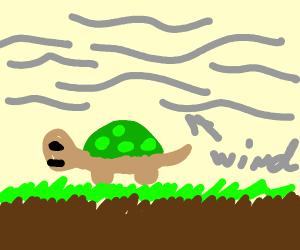 Turtle in a Monsoon