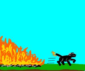 dog narrowly escapes fire