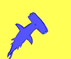 Crying hammerhead shark