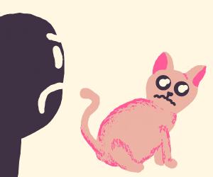 Man hates kitten