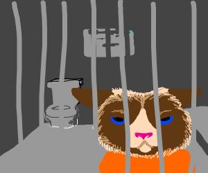 Cat in jail