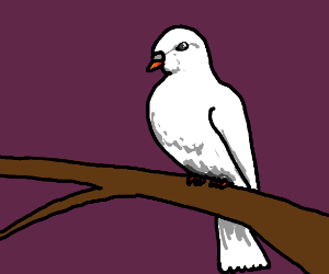 The White Dove Perches on the Branch