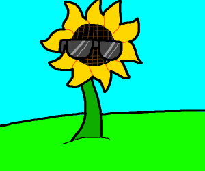 sunflower with sunglasses