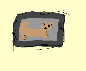 When a phone eats a retarded cat