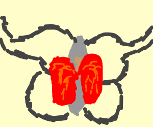 Lung cancer moth