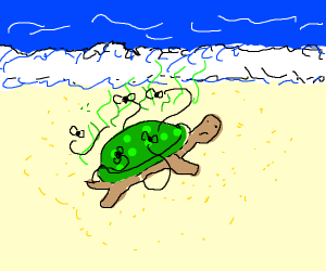 Smelly turtle on Beach