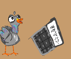A pigeon looks to a laptop