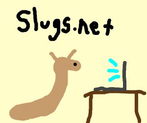 Slug using a computer