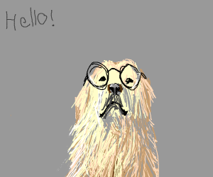 old dog with glasses greets you