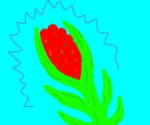cherry-corn