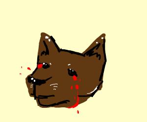 Brown animal crying blood