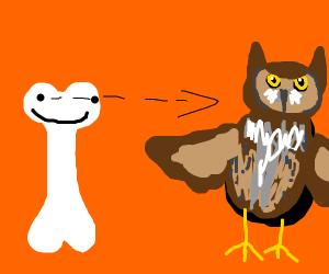 human bones looking at an owl
