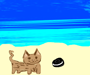 cat and oreo hang out at the beach
