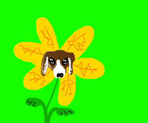 Yellow flower with puppy face