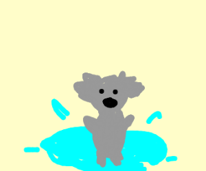 Koala playing in puddle