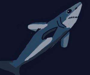 Drag deep sea shark