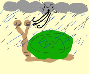 Snail in a Monsoon