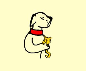 dog carrying sleeping cat