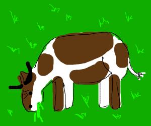 cute cow munching on grass