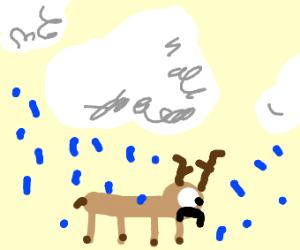 Sad deer under rain