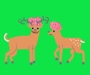 brainy elks