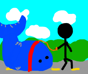 Just takin my whale on a walk