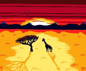 Giraffe watches the sunset
