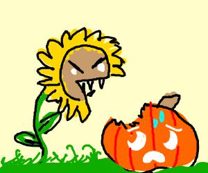 Sunflower eats Pumpkin :/